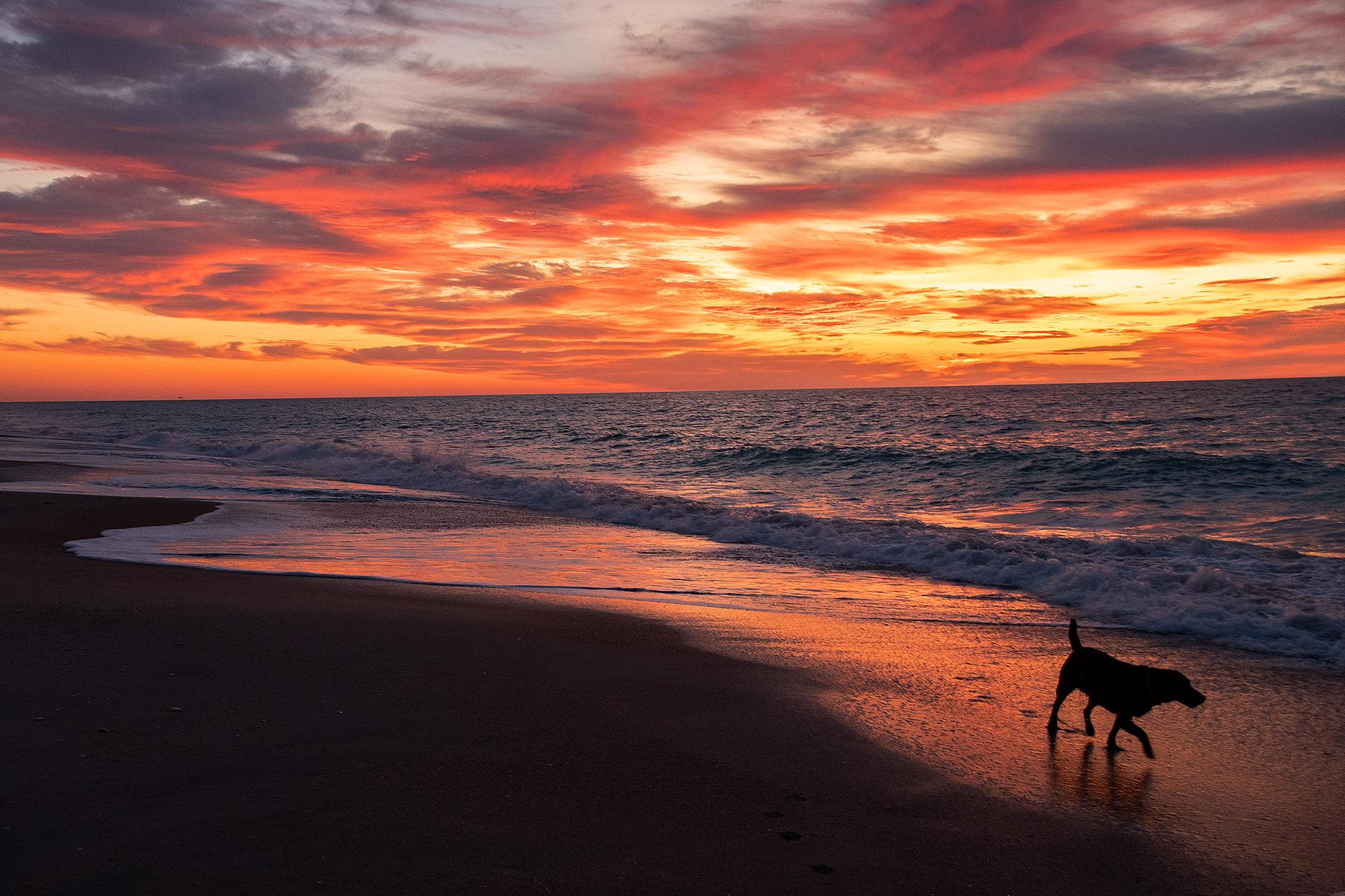 083119pod_sunrisedog4