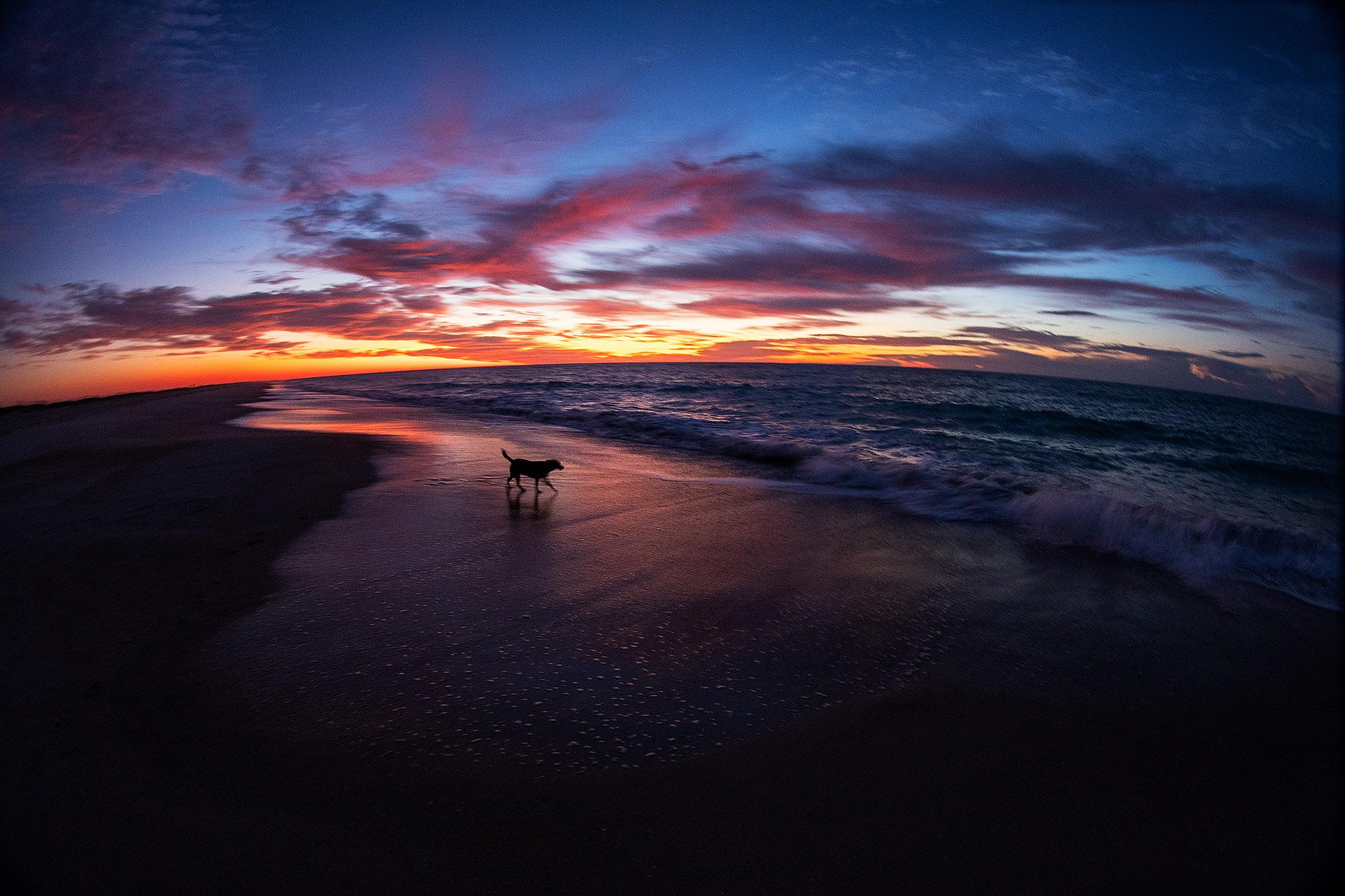 083119pod_sunrisedog5