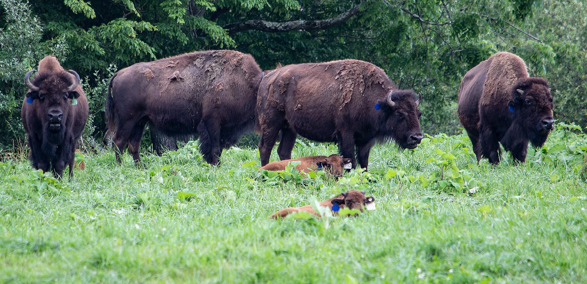 062920pod_buffalo